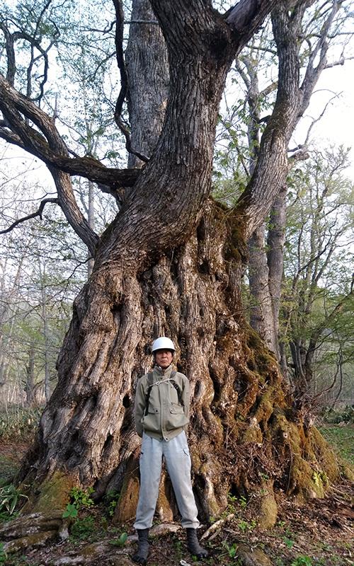 夢見平最奥の桂大木